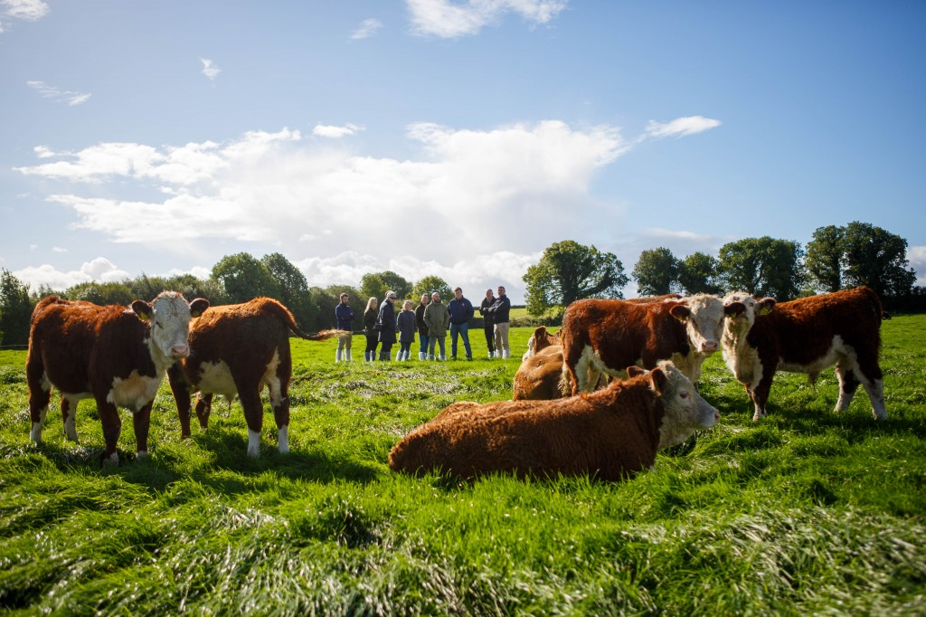 2 - COWS 2016-09-25 - Bord Bia London Chefs Tullamore-5236